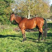 Linke Seite nicht so perfekt wegen störendem Schweißbild, aber da das Pferd einfarbig ist, ist es ok