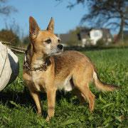 Hund linke Seite (hier besser, wenn man komplett seitlich fotografiert hätte und der Hund nach vorne schauen würde)