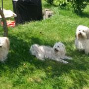 Banjo mit Schwester Bella und Mama Trixie.