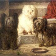 Malteser auf Valde Marirminger Gemälde