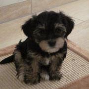 wuff wuff mein Name ist  Annabelle von Limes-Steinberg ich bin am 20.12.2012 geboren u. seit dem 16.02.2013 habe ich eine neue Familie