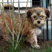 Hallo mein Name ist  Boni von Limes-Steinberg, ich bin am 14.03.2013 geboren u. seit dem 02.06.2013 habe ich eine neue Familie