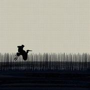 Single Border Sawgrass Bird