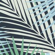 Areca Palm: Super size
