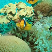 Coral Reefconservation Kurs