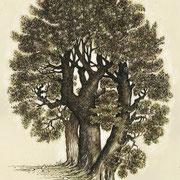 Trois arbres 21 x 29,7 cm