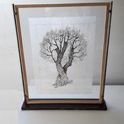 Olivier sous verre 21 x29,7 cm