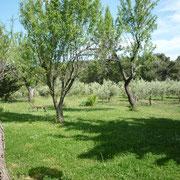 jardin gite Pays Cathare Gites de France dans l'Aude à Mailhac en Minervois
