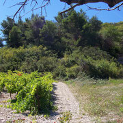chemin de vignes gite pays cathare dans l'Aude à Pouzols minervois avec piscine