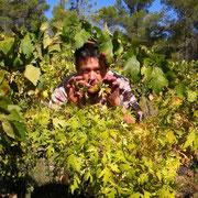 vigneron gite Pays Cathare Gites de France dans l'Aude à Ferrals les Corbieres