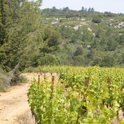 Accueil vignoble à Ribaute au Domaine des Cascades à Ribaute