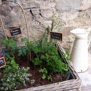 plantes aromatiques gite Pays Cathare Gites de France dans l'Aude à Castelnau d'Aude