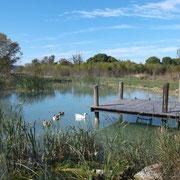 étang de pêche gite Pays Cathare Gites de France dans l'Aude à Narbonne à proximité de la mer