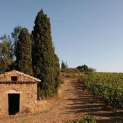 domaine viticole gite Pays Cathare Gites de France dans l'Aude à Ferrals les Corbieres