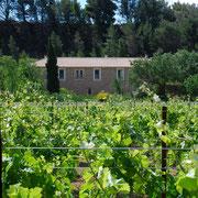 domaine gite pays cathare dans l'Aude à Pouzols minervois avec piscine