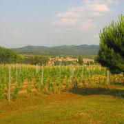 vigne gite Pays Cathare Gites de France dans l'Aude à Cavanac