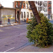Leaning Trees, Dead and Alive, From the Discarded Xmas Tree Series, New York City 2008