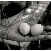 Holding Eggs, Croatian Woman, Mjlet, Croatia, 2002