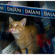 Dasani Window Cat, Bronx, NY 2008