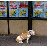 Dog Outside Big Apple Grocery Store-Nervously Awaiting Owner, 9th Avenue, NYC 2008