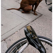 Saddles and Tails, Bike and Dog, NYC 2008