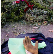 Still Life, Dead Trees, From the Discarded Xmas Tree Series, New York City 2008