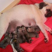 Amy mit allen 6 Babys