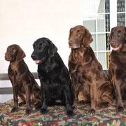 Familienfoto von Links: Samba, Mama Fée, Grossmutter Kiri und Göre Brownie