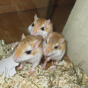 Sammy, Mini und Milli