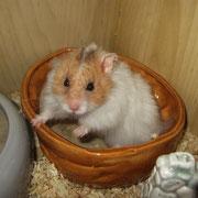 Fossi im Hamsterklo ;)