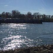 Rhein bei Benrath