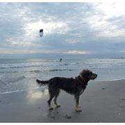 En octobre 2013 sur la plage des Saintes Maries de la Mer.