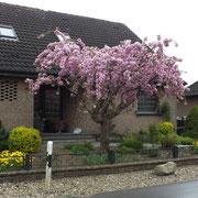 2. Bild: Sicht auf den Hauseingang.