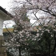 武道館を遠景に