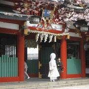 山王日枝神社 桜と白無垢