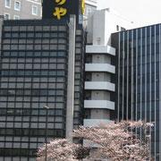 赤坂 虎屋前 五分咲き程度