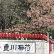 豊川稲荷前 江戸彼岸桜のため、すでに葉桜