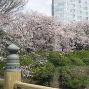 赤坂プリンス前のお堀