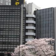 虎や前の桜