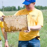 Настоящие пчелиные соты