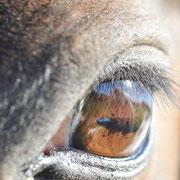 """Mein Pferd ist mein Spiegel, der meine schlechte und gute Laune unverfälscht wiedergibt. """"Sieh hinein in die Augen deines Pferdes, aber erschrecke nicht über die Wahrheit!!!"""""""