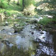 La Vézère en aval du barrage de Treignac