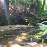 L'Alembre en amont de la confluence avec la Vézère