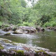 La Vézère en débit réservé en aval du barrage de Viam