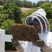 apiculture grenoble