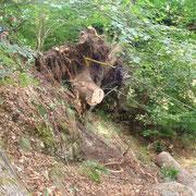 Esbosco e laglio alberi pericolanti