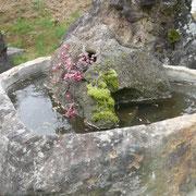 水鉢と水吸石