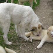 Chouchou kümmert sich immer noch liebevoll um ihren Nachwuchs.