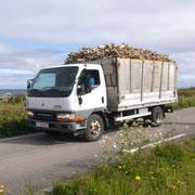 Transport de la morue par camion