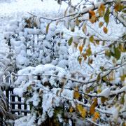 """""""Da freut man sich schon auf den Winter...."""""""